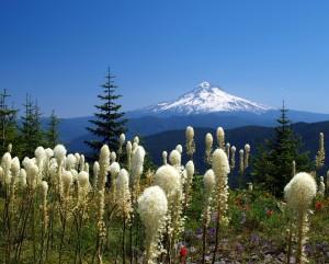 The Best Outdoor Adventures Near Portland @ Hillsboro Main Library | Hillsboro | Oregon | United States