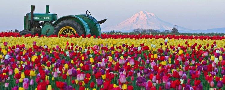 tulip-fest-gallery10